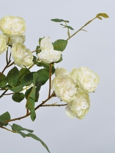 Trosroosje wit/groenig