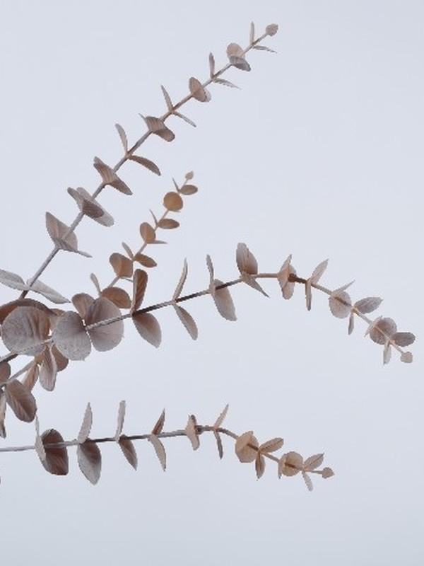 Eucalyptus Bruin 74 cm