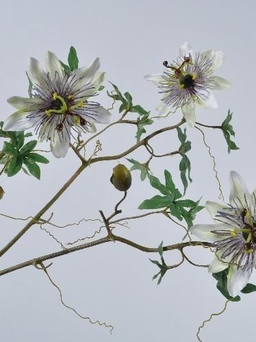 Passiflora creme 67 cm