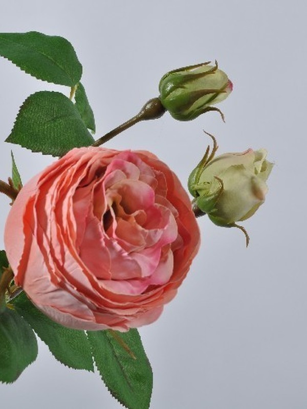 Roos perzik 49 cm