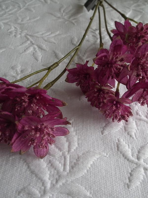 Astrantia rose 49 cm