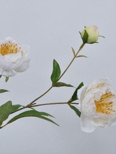Pioen roos wit 72 cm