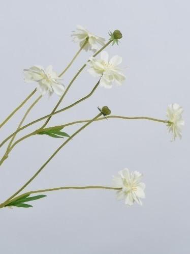 Veldbloempje wit 65 cm