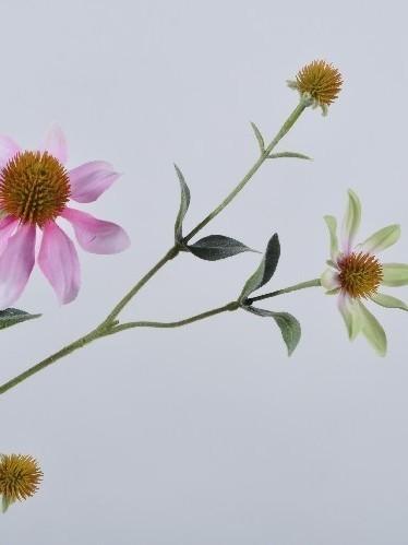 Rudbeckia roze 71 cm