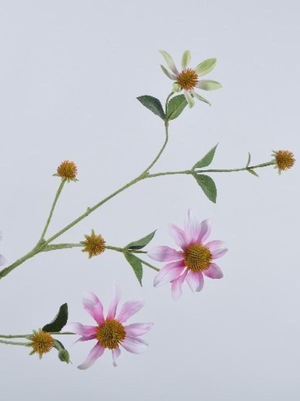Rudbeckia roze 93 cm