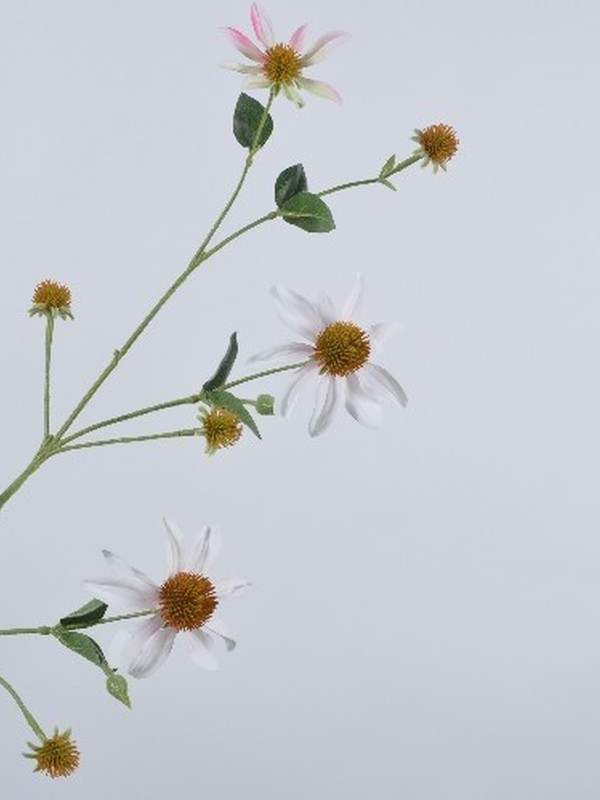 Rudbeckia wit roze 93 cm
