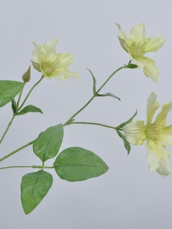 Clematis zacht groen 74 cm