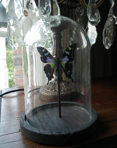 Glazen stolp met vlinder