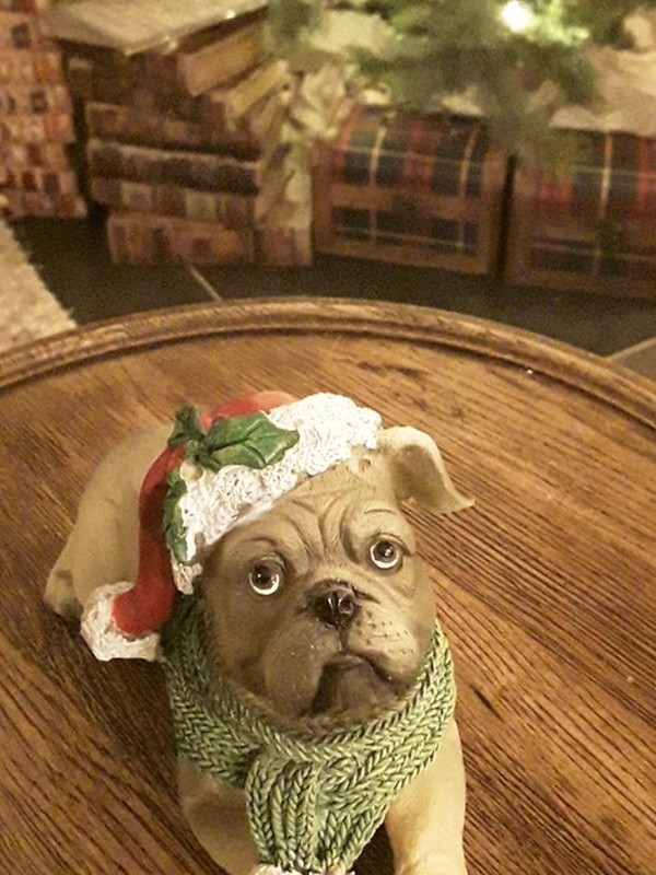 Buldog met kerstmuts en sjaal
