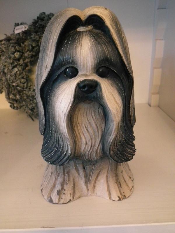 Hond shih tzu als box
