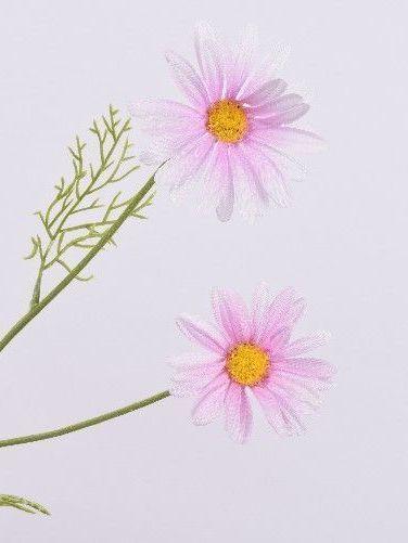 Margriet roze